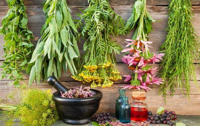 12 Лекарственных растений, способных причинить вред здоровью