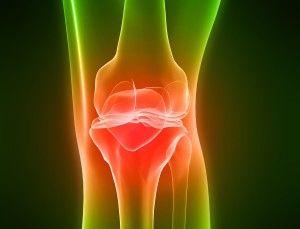 Анатомия колена: кости, мышцы, связки коленного сустава