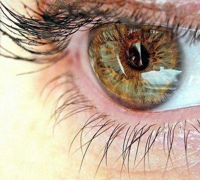 Глазные болезни (офтальмология) улучшаем зрение черникой