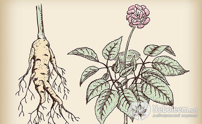 Как нас лечат растения: лекарственные травы и их чудодейственные свойства
