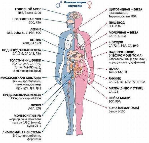 Как по анализам определить рак? Общие анализы при онкологии, инструментальные методы диагностики