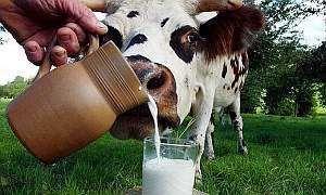 Молоко детям до года и после
