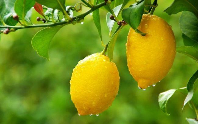 Лимон от веснушек: цитрусы, на помощь!