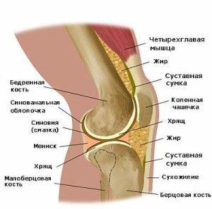 Новая связка в коленном суставе