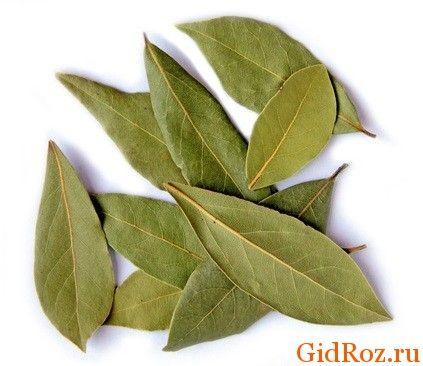 Листья этого благородного растения найдутся в каждом доме. Они нужная помощь в борьбе с кожными высыпаниями!