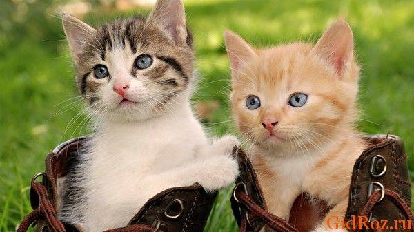 Почему коты балдеют от запаха пота?