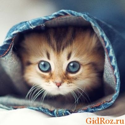 Замечено, что котов очень привлекают не совсем приятные запахи. На это есть ряд причин...