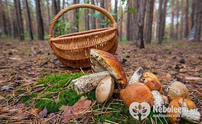 Поговорим о плюсах и минусах грибов