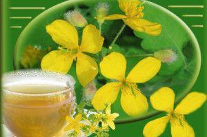 Применение масла чистотела при грибке ногтей