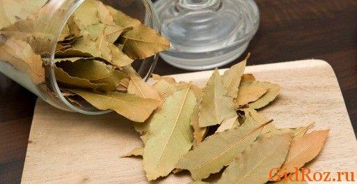 Отличное средство, способное победить сыпь, есть в каждой кухне. Это сухой лавровый лист!