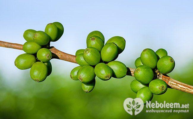 Все, что вы хотели знать о зеленом кофе